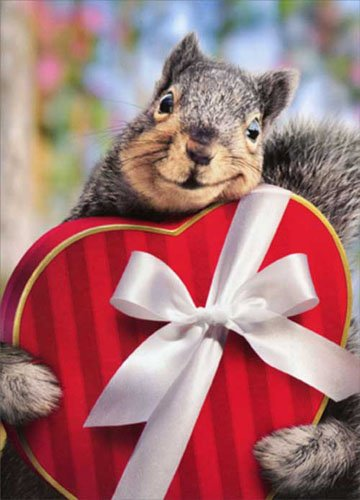 Squirrel Holds Heart Box Standout Stand Out Pop Up Funny Valentine's Day Card