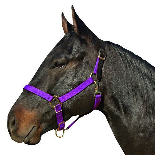 - Intrepid International Breakaway Leather Crown Nylon Safety Halter, Cob Purple