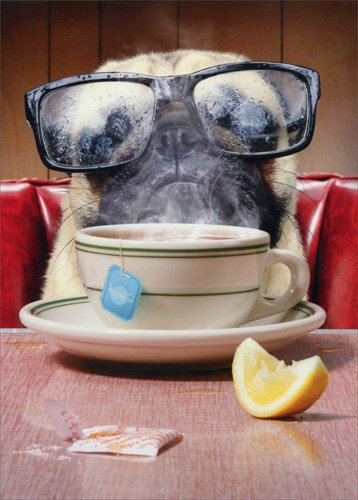 Pug With Steamed Glasses - Avanti Funny Dog Encouragement Card
