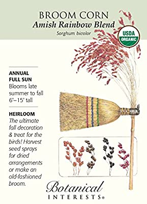 Broom Corn Amish Rainbow Blend Certified Organic Heirloom Seeds 60 Seeds