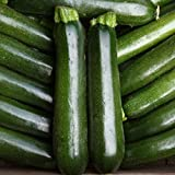 buy Courgette - Midnight - 15 Seeds now, new 2018-2017 bestseller, review and Photo, best price $2.03