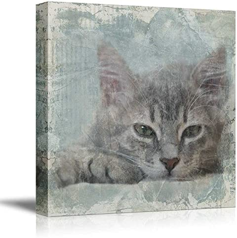 Square Cat Series Cat with Grunge Background