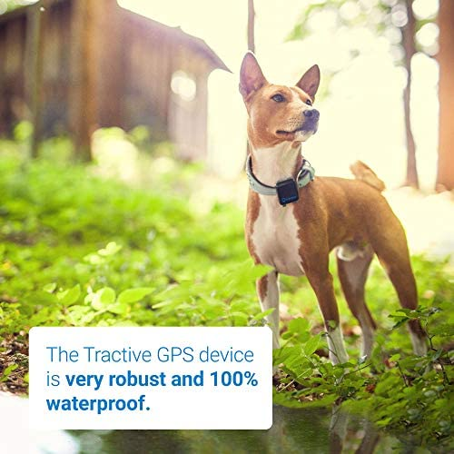 Tractive 3G GPS Dog Tracker  Lightweight and Waterproof Dog Tracking Device with Unlimited Range