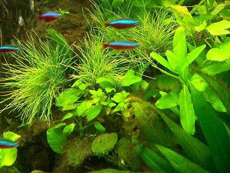 Acuario Set XXL para 500 - 600 L de agua Platillos, plantas ...