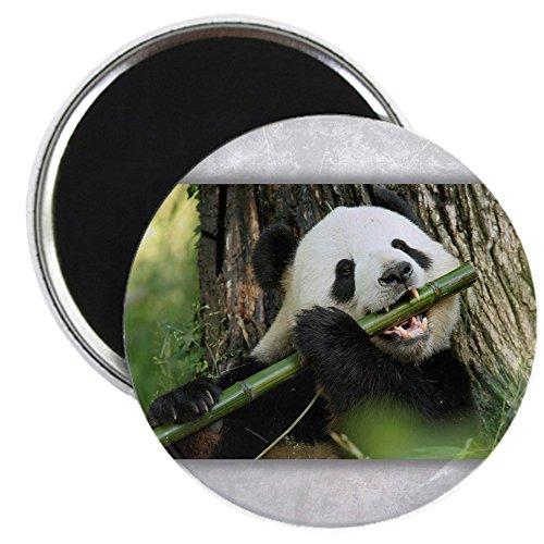 2.25 Inch Magnet Panda Bear Playing Bamboo Flute