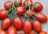 30+ ORGANICALLY GROWN Italian Cherry Plum Roma Tomato Seeds, Heirloom NON-GMO, Extra Sweet and Heavy-Yielding, Low Acid, Indeterminate, Open-Pollinated, Long Season, Delicious, From USA