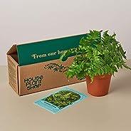 House Plant Box - Subscription: Pet Friendly House Plant Box