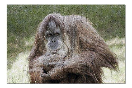 Orangutan Framed - 6