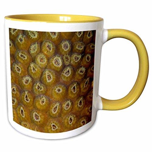 3dRose Danita Delimont - Marine Life - Star Coral Polyp marine life, Sian Kaan, Mexico - SA13 POX0144 - Pete Oxford - 11oz Two-Tone Yellow Mug (mug_86751_8) (Polyp Star Coral)