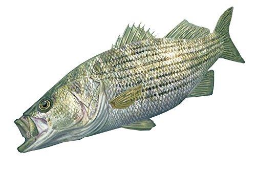 Skiff Life Striper Fishing Decal Striped Bass Sticker Rockfish