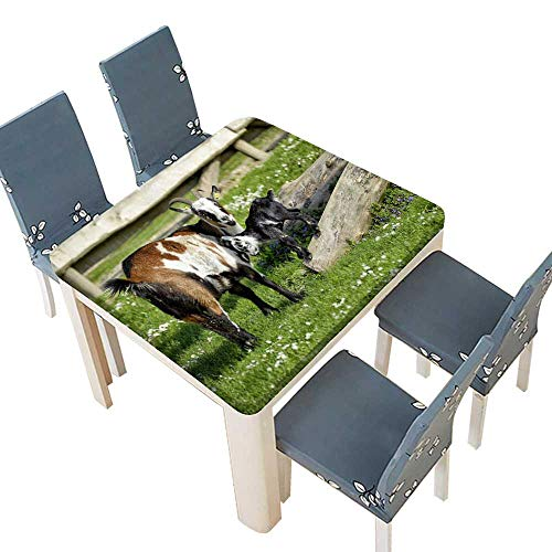 (PINAFORE Polyester Tablecloth Milk Lamb Table Cover 65 x 65 INCH (Elastic Edge))