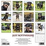 Just Rottweilers 2020 Wall Calendar (Dog Breed Calendar) 3