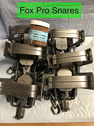 (6 Duke #2 Square Jaw 4 coil spring traps with 1 FREE jar of FPS 3 meat supreme Bait fox, coyote, bobcat, raccoon)