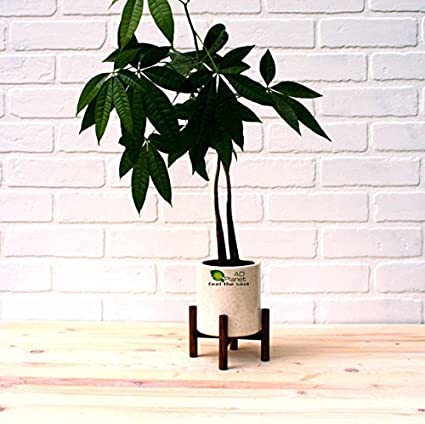 Mid Century Indoor Plant Stand Hand Made In India Home Decor !! Ships World  Wide