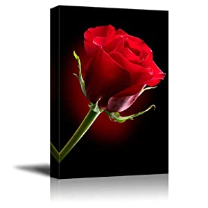 """Canvas Prints Wall Art - Closeup of Red Rose Flower Against Black Background   Modern Wall Decor/Home Decoration Stretched Gallery Canvas Wrap Giclee Print & Ready to Hang - 16"""" x 24"""""""