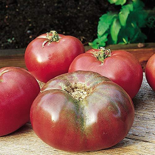 Burpee Cherokee Purple' Heirloom Large Slicing Tomato Rich Flavor, 3 Live Plants, 2 1/2