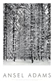 Pine Forest in Snow, Yosemite National Park, 1932 Photography Art Poster Print by Ansel Adams, 24x36