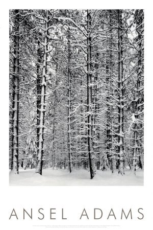 Pine Forest in Snow, Yosemite National Park, 1932 Art Poster Print by Ansel Adams