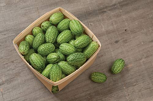 Davids Garden Seeds Cucumber Gherkin Mexican Sour SL3174 (Green) 50 Non-GMO, Organic Seeds