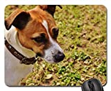 Mouse Pads - Jack Russell Terrier Play Meadow Race Dog Animal 5