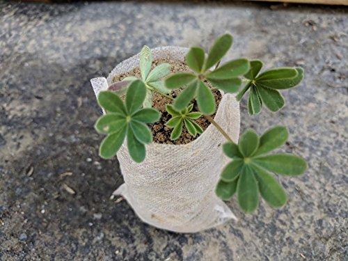 Eco Friendly Garden Bags - 7
