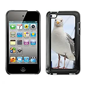 GoGoMobile Slim Protector Hard Shell Cover Case // M00119167 Animal Curious Beak Bird Feather // Apple ipod Touch 4 4G 4th