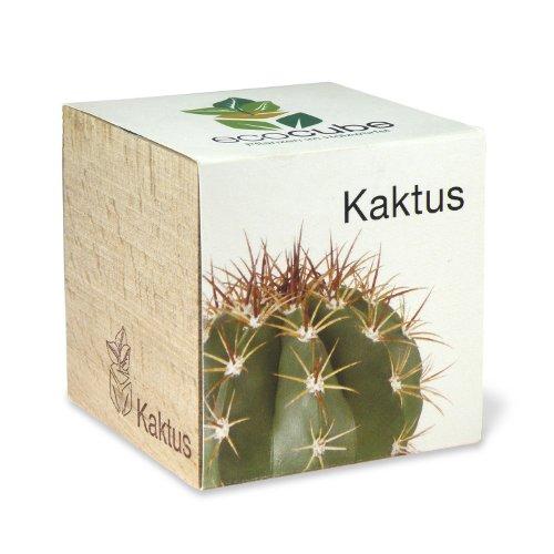 ecocube Holzwürfel - Kaktus