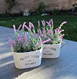 This adorable set of 2 wooden planters with imitation purple lavender will add a touch of spring to any room! Display them on end tables, on a wall or hanging from the ceiling of the patio.