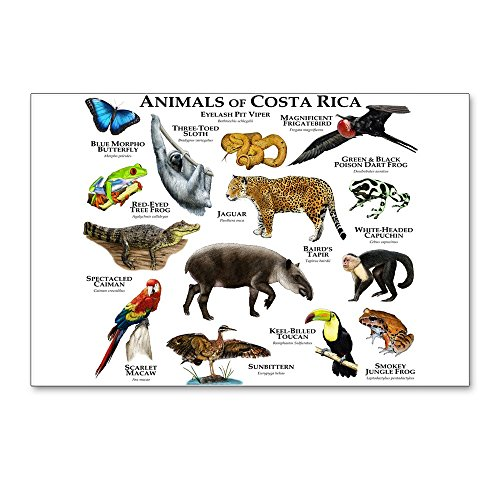 CafePress - Costa Rica Animals - Postcards (Package of 8), 6