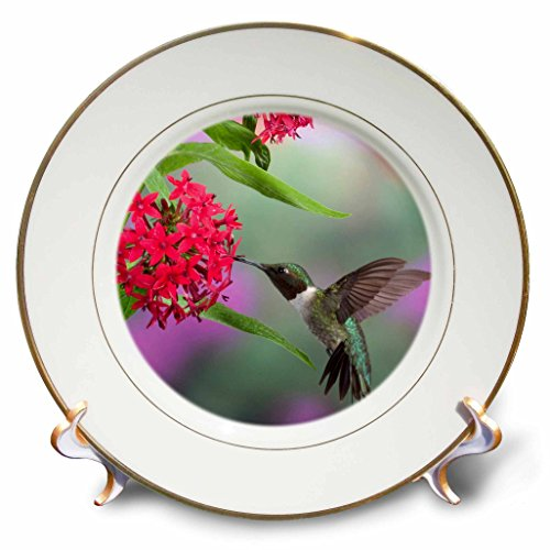 """3dRose cp_206218_1 Ruby-throated Hummingbird on Egyptian Starcluster Marion Co. IL-Porcelain Plate, 8"""""""