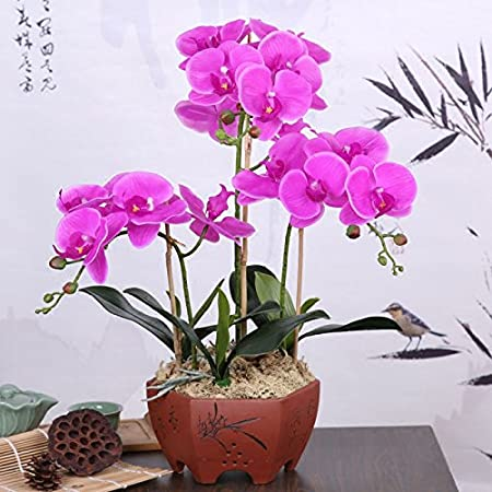 The Feeling Of The Pu Emulation Flower Moth Orchid Suites Decorated ...