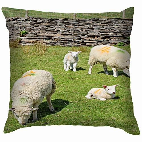 Sheep Young Graze Mountains Snowdonia Animals Wildlife Agriculture Parks Outdoor Throw Pillows Covers Accent Home Sofa Cushion Cover Pillowcase Gift Decorative 12X12 Inch