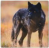 3dRose LLC 8 x 8 x 0.25 Gray Wolf Wildlife Denali National Park Alaska Steve Kazlowski Mouse Pad (mp_87702_1)