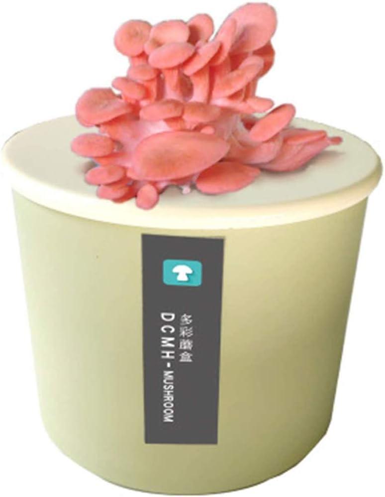 MZBZYU Kit Setas Autocultivo Ostra, Caja De Cultivo Casero De Setas Ostra, Kit De Bricolaje para Cultivar Tus Hongos En Dos Semanasgold Oyster Mushroom-Pink