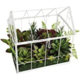 A&B Home Succulent in Greenhouse, 11.8 by 9.5 by 14.5-Inch