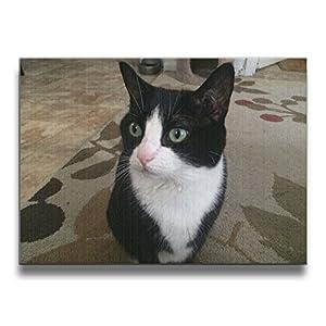 Janvonne 1620 Inch Cat Photograph Borderless Frame Photo Wall Art