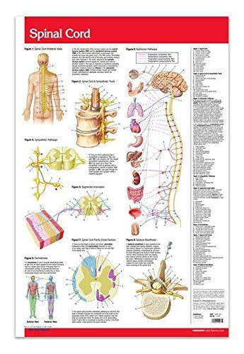 Nose and Throat Poster Skeletal System Poster Spinal Cord Poster and Ear Medical Doctors Office Wall Art Bundle 3 Laminated 24 x 36 Anatomy Posters