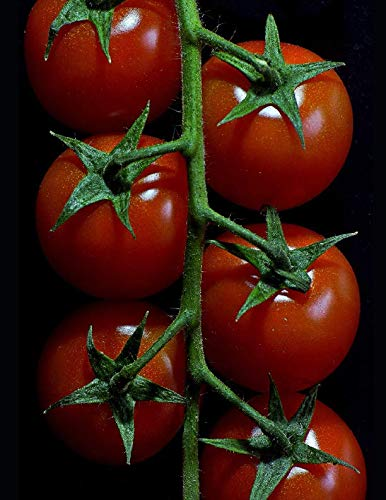 (Tomato Growers Notebook: 150 Large Blank Lined Pages)