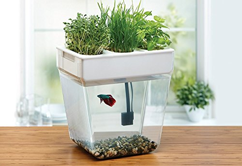 Back to the Roots Water Garden Fish Tank, Premium
