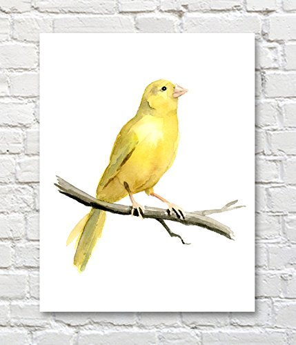 - Canary Bird Watercolor Canary Art Print by Artist DJ Rogers