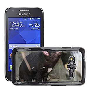 Etui Housse Coque de Protection Cover Rigide pour // M00109941 Demonio de Tasmania Sarcophilus // Samsung Galaxy Ace4 / Galaxy Ace 4 LTE / SM-G313F