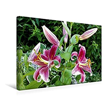 Lilie Bild auf Leinwand mit Keilrahmen 4 Bilder Wadbild