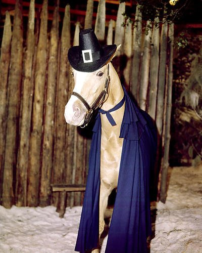 Mister Ed Promotional Photograph