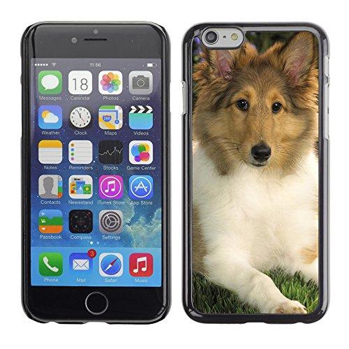 "Premio Sottile Slim Cassa Custodia Case Cover Shell // V00003611 flânant chiot sheltie // Apple iPhone 6 6S 6G 4.7"""