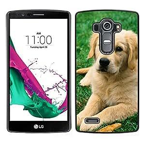 // PHONE CASE GIFT // Duro Estuche protector PC Cáscara Plástico Carcasa Funda Hard Protective Case for LG G4 / Labrador Retriever Golden Dog Puppy /