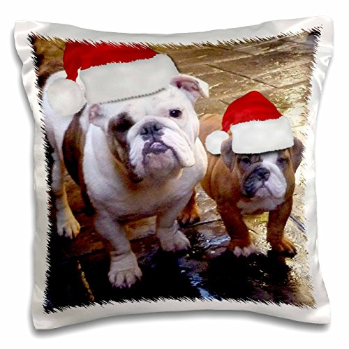Santa Bulldogs Pillow (3dRose pc_63087_1 English Bulldog Christmas Wearing Santa Hats-Pillow Case, 16 by 16