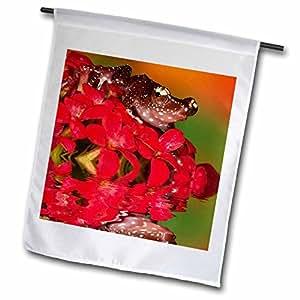 Danita Delimont - Frogs - Cinnamon tree frog on red flower - NA02 BJA0027 - Jaynes Gallery - 18 x 27 inch Garden Flag (fl_83694_2)