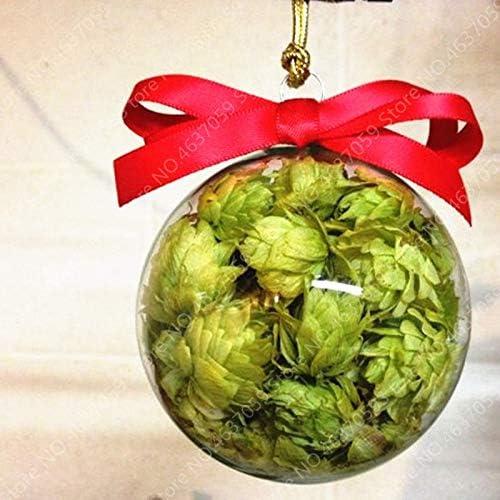 50Pcs Sac allemand Houblon Humulus lupulus brasser votre propre bi/ère vivaces Graines Aujourdhui Graines Forme Bloomseeds