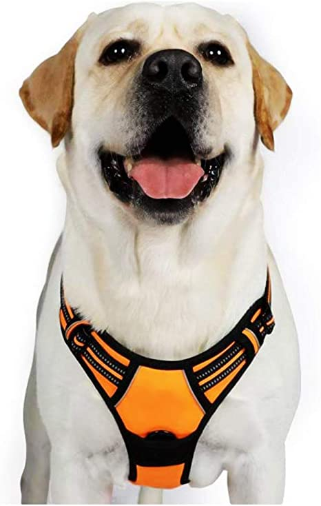 rabbitgoo Dog Harness,No-Pull Pet Harness with 2 Leash Clips