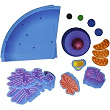 Learning Resources LER6039 Giant Magnetic Animal Cell